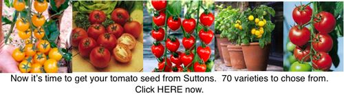 Tomato seed from Suttons