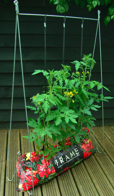 Tomato growing frame system from yellowbelly